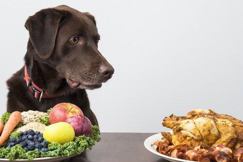 Cane marrone e diversi alimenti