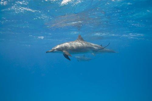 Come dormono i delfini?