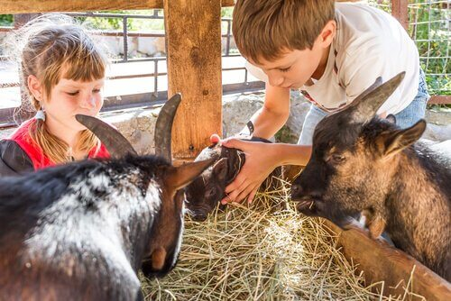 Consigli per andare allo zoo con i bambini