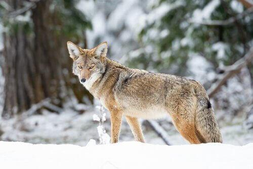 Willie coyote e l icd capitolo u alienazione genitoriale