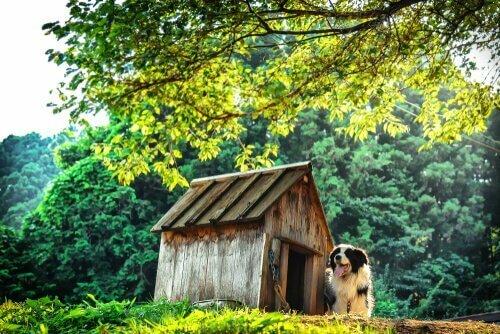 Cuccia per il cane