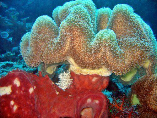 Diversi tipi di spugna di mare