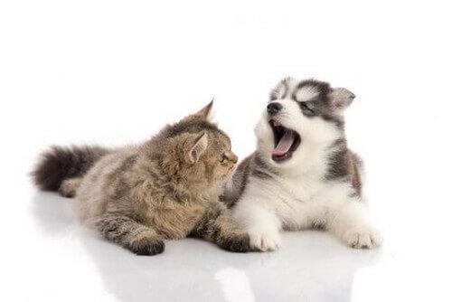 La caduta dei denti in cani e gatti: cosa sapere