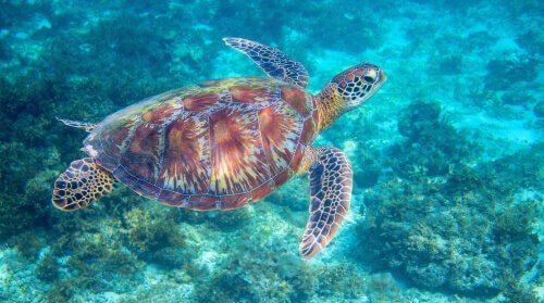 età-della-tartaruga-carapace
