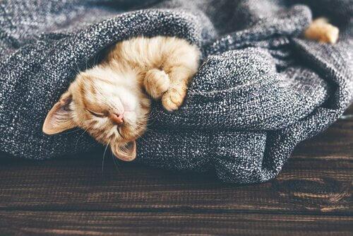 I cambiamenti di temperatura influiscono sui gatti