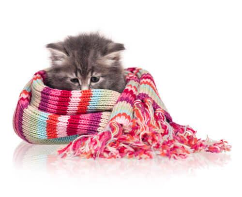 Gatto avvolto in una sciarpa colorata