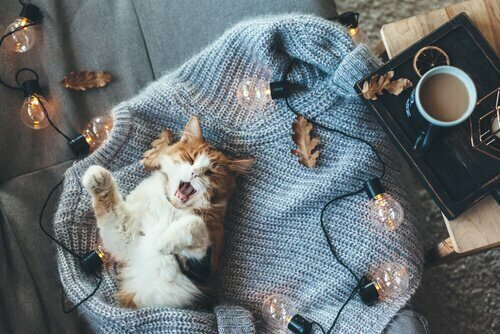 Gatto dorme su maglione