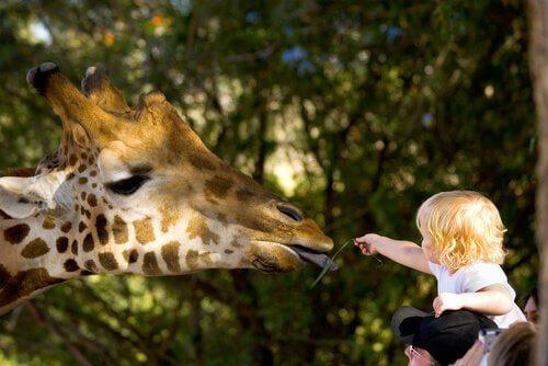 Giraffa con bambino allo zoo