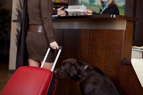 Cane e padrona in albergo
