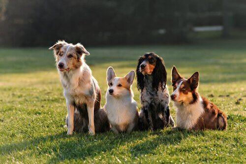 I cani e la socializzazione