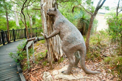 Canguro Goliath