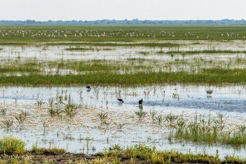 La fauna della riserva naturale di Doñana