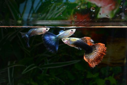 Pesci dentro acquario