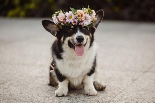 Profumi per cani: vantaggi e svantaggi
