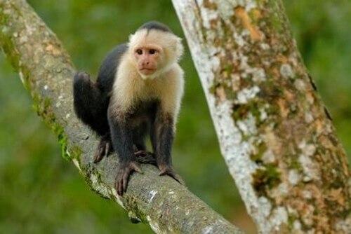 Scopriamo l'Età della pietra nelle scimmie