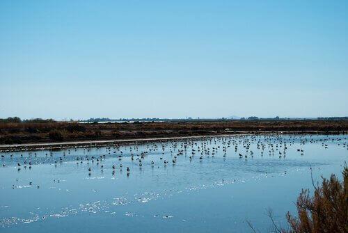 Uccelli nella riserva di Doñana