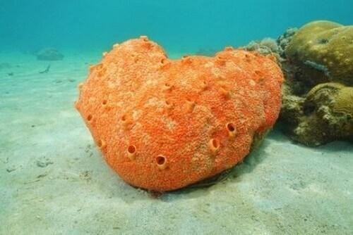 Tutto quello che c'è da sapere sulle spugne marine