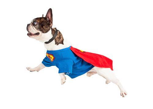 Scopriamo insieme 6 storie di cani eroi