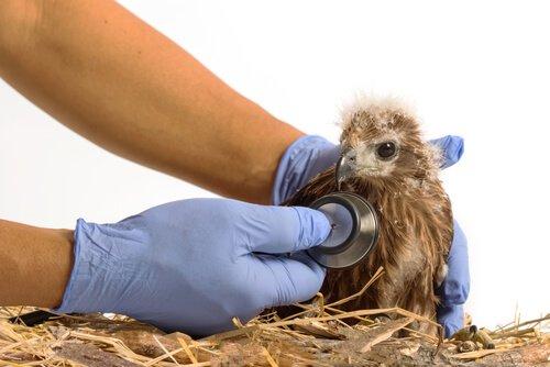 Veterinario visita uccello