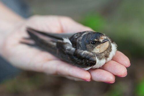 Come capire se un uccello è malato?