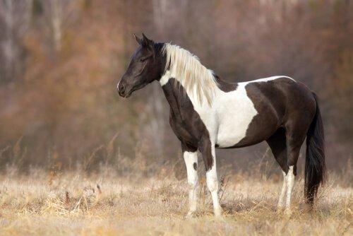 Come impedire lo stress nei cavalli
