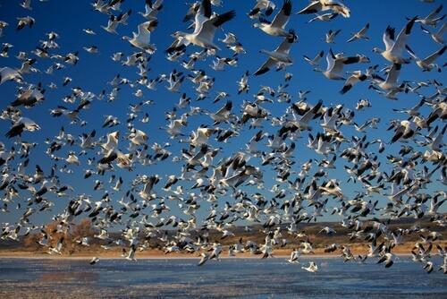 Le migrazioni di massa più sorprendenti