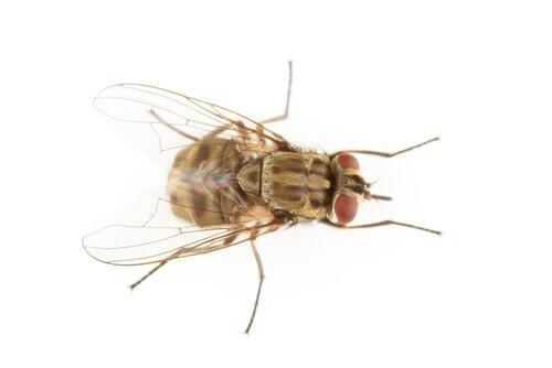 Sintomi della puntura della mosca cavallina