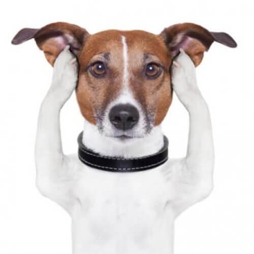Il sesto senso dei cani sordi