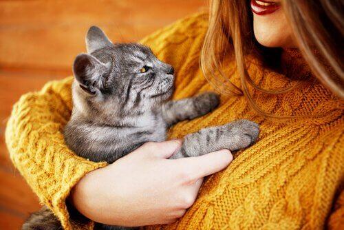 Abbracciare il gatto
