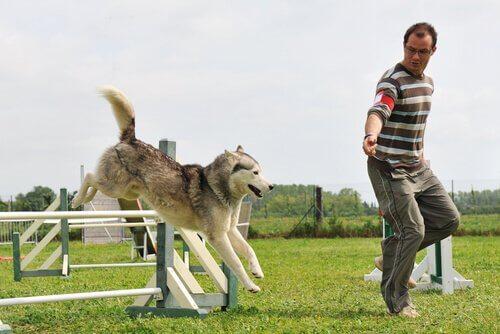 Allenamento agility dog