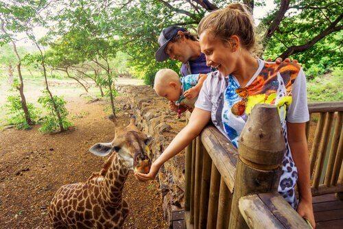È pericoloso dare da mangiare agli animali dello zoo?