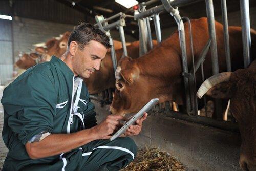 Gli agenti antiparassitari per bovini