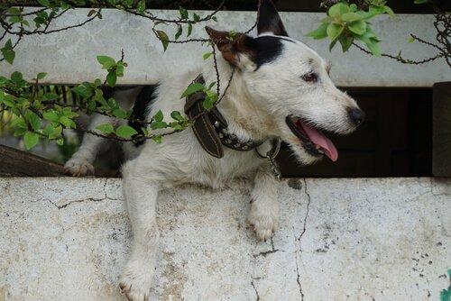 cane tra le mura