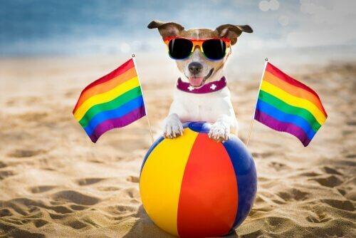 I cani possono essere omosessuali?