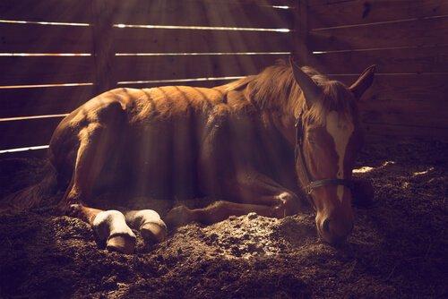 Coliche nel cavallo