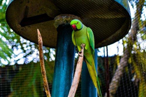 Commercio di pappagalli
