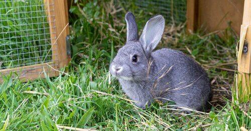 La conigliera: la casa ideale per i vostri conigli