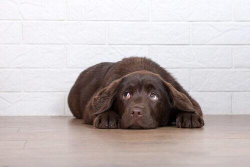 Cose che il cane odia e forse non sapete