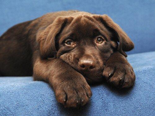 longevità dei cuccioli