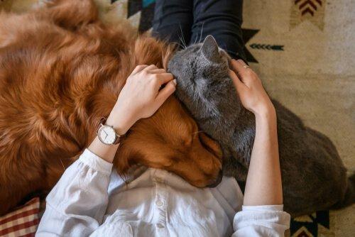 Come dimostrare affetto al vostro animale domestico