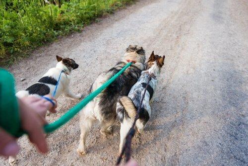 6 consigli per diventare un bravo dog walker