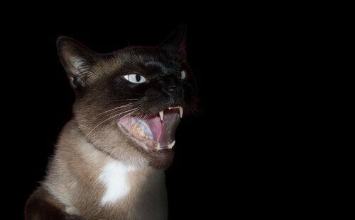 Fobia per gatti