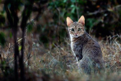 La storia dei gatti nell'Antico Egitto