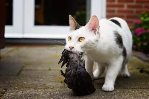 gatto caccia uccello