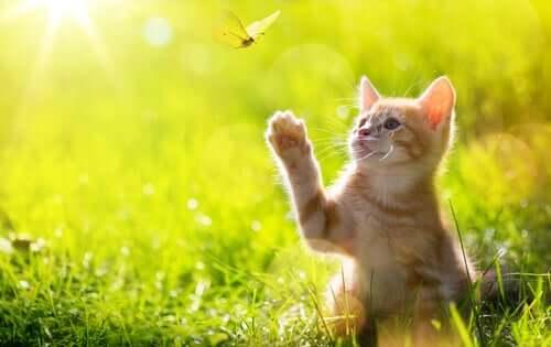 come un gattino impara a cacciare