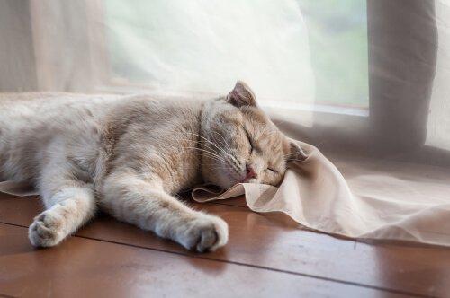 Quando preoccuparsi di un gatto che russa?