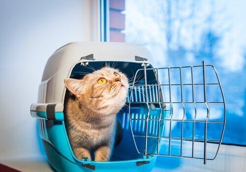 gatto dentro trasportino aperto