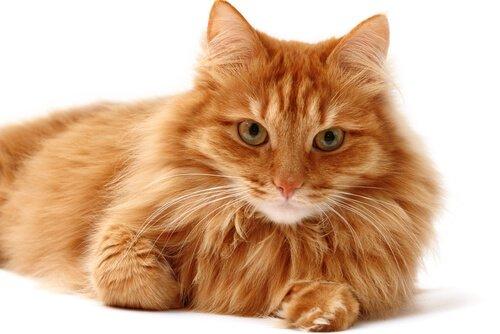 il gatto e i suoi peli