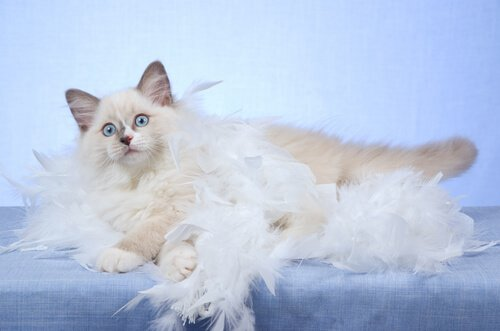 5 cose da sapere sulla muta del gatto