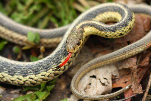 I sensi dei serpenti
